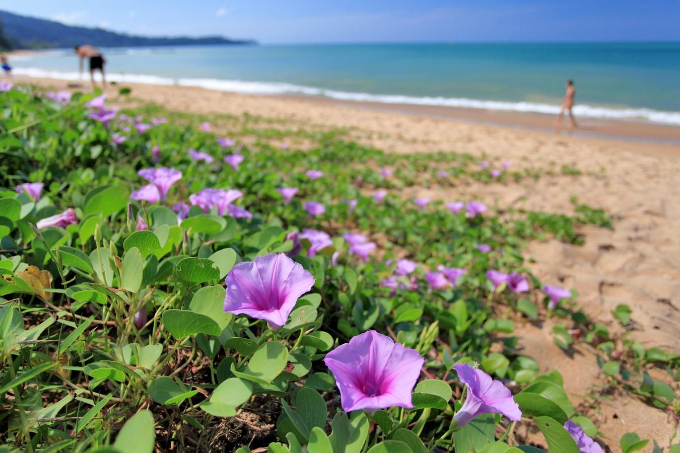 Ramada Resort by Wyndham Khao Lak - Image 5