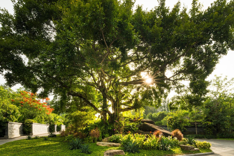 Anantara Layan Phuket Resort - Image 0